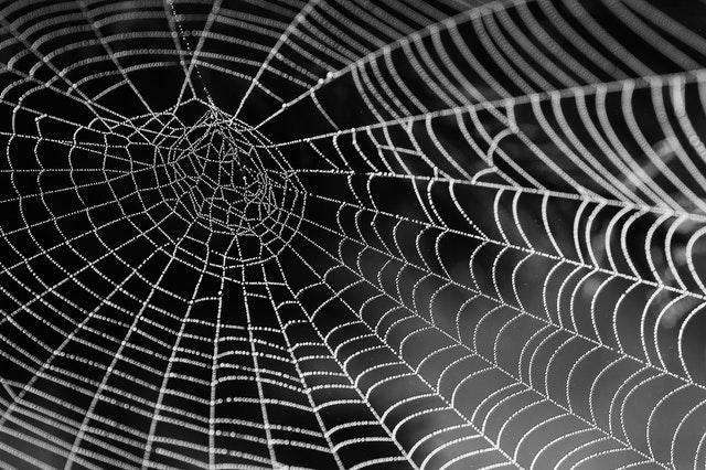 spider control ashburn va